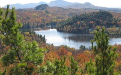 Article sur la conservation des milieux naturels du sud du Québec (Journal Le Soleil, 13 février 2014)