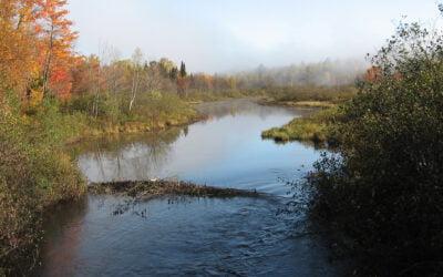 Une première réserve naturelle à Brossard reconnue officiellement